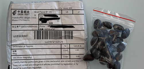 Mysterious packages of seeds from China showing up in mailboxes nationwide. - ALLOW IMAGES
